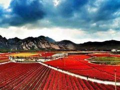 嵖岈山温泉小镇秋季郁金香文化节即将结束,我们明年不见不散
