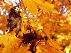 鸡冠洞:看秋叶飘零,赏花中君子